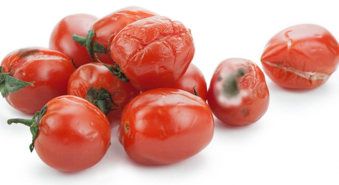 """""""Moldy Tomato"""" Friends (Are You Being """"Infected""""?)"""